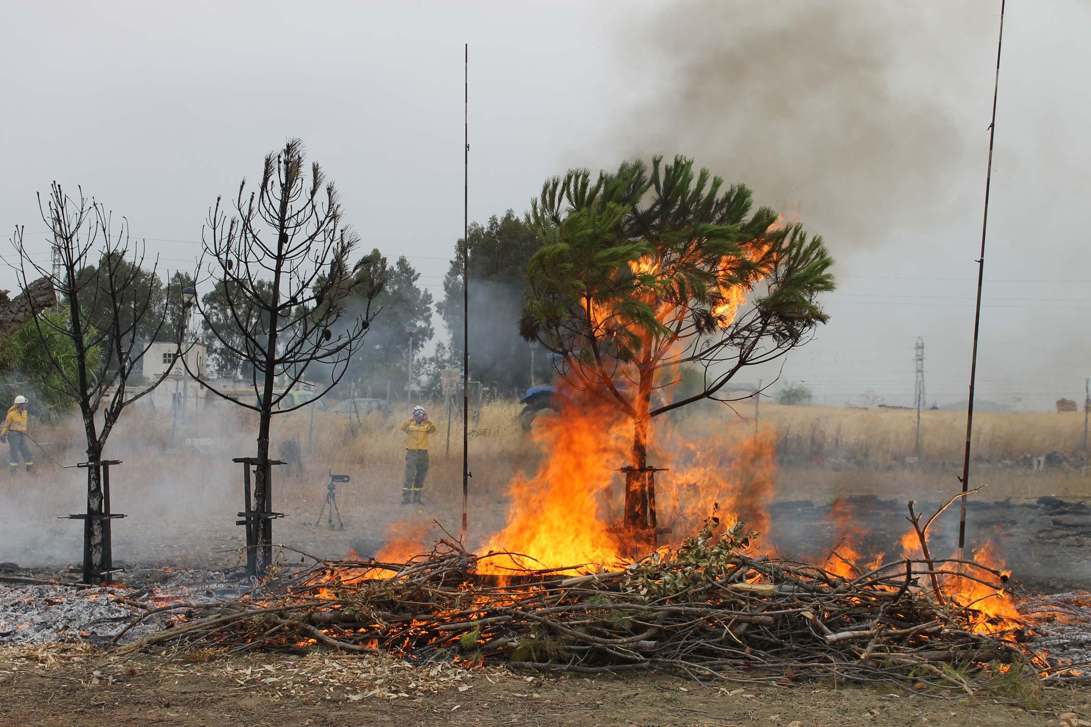 Foto2: Midiendo la propagación vertical del fuego desde un modelo de combustibles formado por restos vegetales. Base de los modelos HR del sistema UCO40