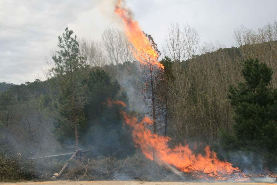 Foto 3. Maquetas experimentales para estudiar y monitorear las transferencias energéticas desde el fuego de superficie a la copa arbórea.
